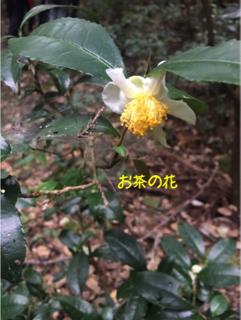 image-20171013210656.png