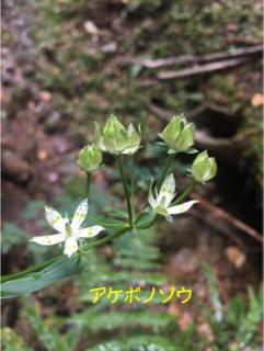 image-20171013210739.png